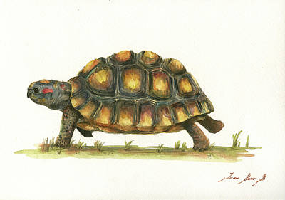 Turtle Wall Art - Painting - Red Footed Tortoise  by Juan Bosco