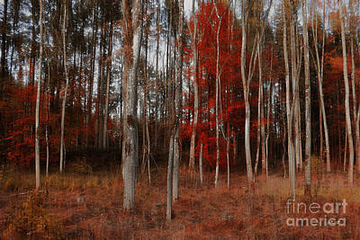Photograph - Red Forest by Jutta Maria Pusl