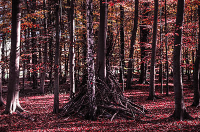 Herbstfarben Photograph - Red Forest by Kai Jarchow