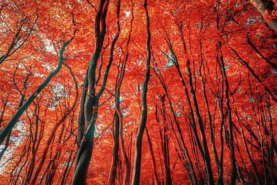 Red Forest Of Sunlight Art Print