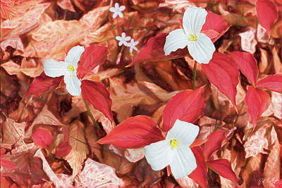 Trillium S Photograph - Red Forest White Flowers by Phill Doherty