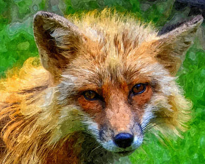 Photograph - Red Fox by Anthony Murphy