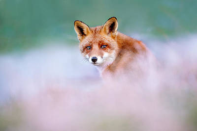 Red Fox In A Mysterious World Art Print by Roeselien Raimond
