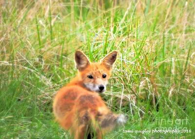 Photograph - Red Fox In The Late Summer Grass by Tami Quigley