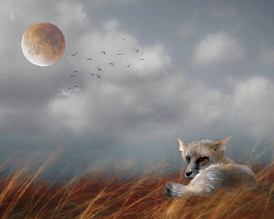 Photograph - Red Fox In The Moonlight by Rebecca Cozart