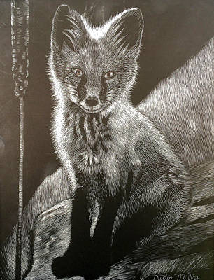 Drawing - Red Fox Kit by Dustin Miller