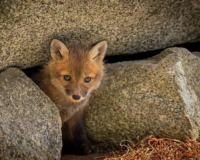 Photograph - Red Fox Kit Peek A Boo by John Vose