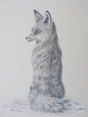 Drawing - Red Fox by Laurianna Taylor