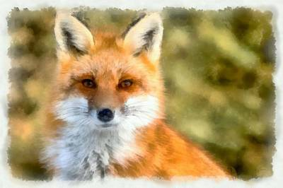 Painting - Red Fox by Maciek Froncisz