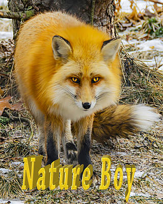 Fox Photograph - Red Fox Nature Boy by LeeAnn McLaneGoetz McLaneGoetzStudioLLCcom
