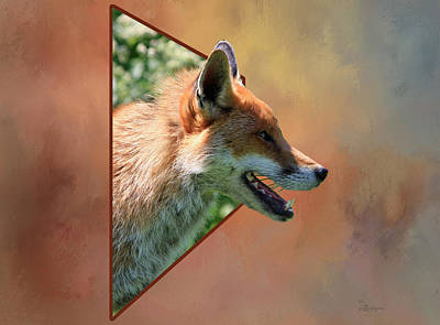 Photograph - Red Fox - Out Of Box by Ericamaxine Price