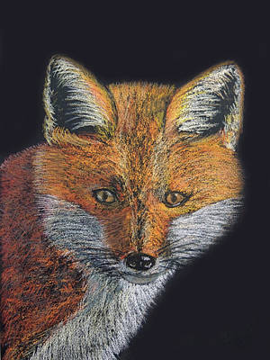 Pastel - Red Fox Portrait by Jayne Wilson