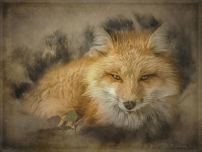 Photograph - Red Fox Resting by Teresa Wilson