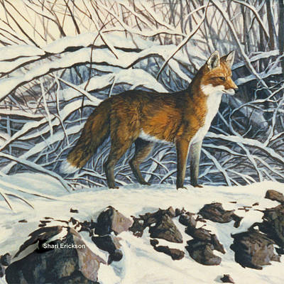 Painting - Red Fox by Shari Erickson