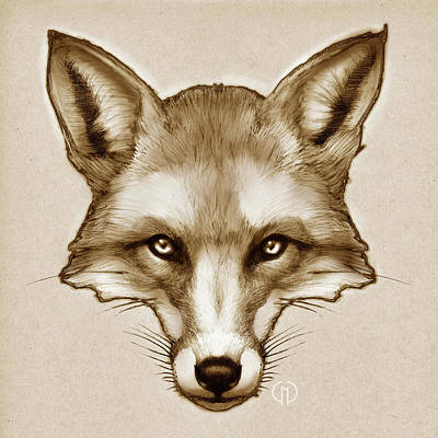 Red Fox Sketch Art Print