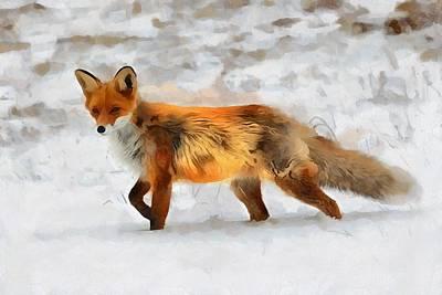Vulpes Digital Art - Red Fox Snow by Judy Coggin