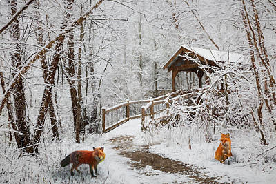 Photograph - Red Foxes In Winter White Painting by Debra and Dave Vanderlaan