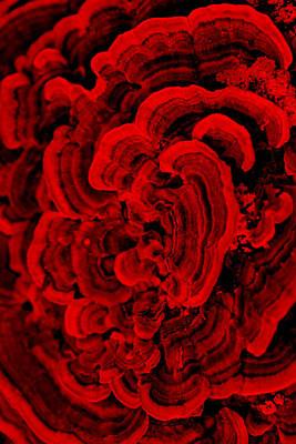 Red Fungi Art Print by Dana  Oliver