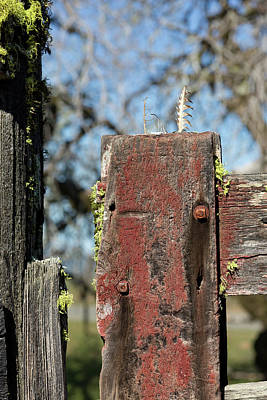 Photograph - Red Gate Post by Kathleen Bishop