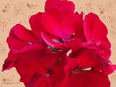 Digital Art - Red Geranium by Donald and Judi Hall