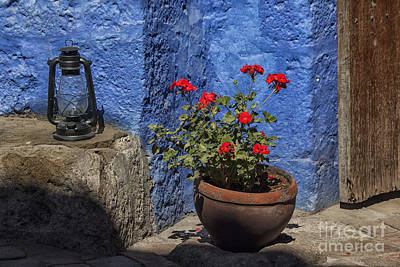 Red Geranium Near A Blue Wall Art Print by Patricia Hofmeester