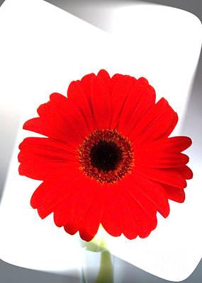 Gerber Daisy Photograph - Red Gerber Wrap by Marsha Heiken