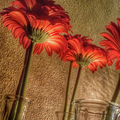 Painting - Red Gerbera Art by Bonnie Bruno