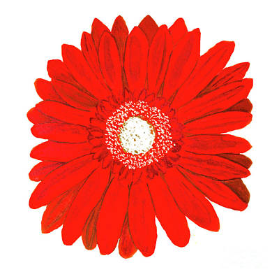 Painting - Red Gerbera On White by Irina Afonskaya