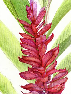 Painting - Red Ginger by Tammie Painter
