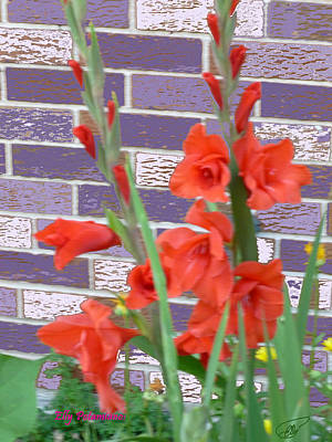 Red Gladiolas Art Print