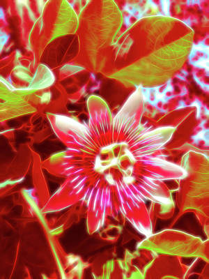 Photograph - Red Glow Passion Flower 1 by Aimee L Maher Photography and Art Visit ALMGallerydotcom