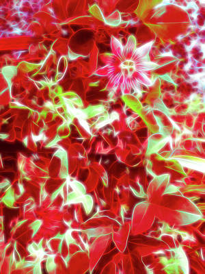 Photograph - Red Glow Passion Flower 2 by Aimee L Maher Photography and Art Visit ALMGallerydotcom