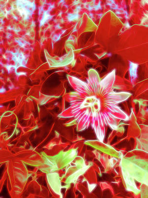 Photograph - Red Glow Passion Flower 3 by Aimee L Maher Photography and Art Visit ALMGallerydotcom