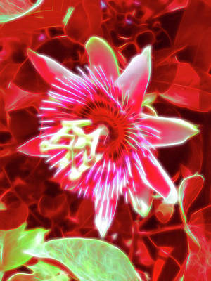 Photograph - Red Glow Passion Flower 5 by Aimee L Maher ALM GALLERY