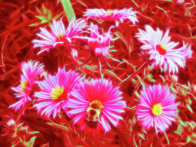 Photograph - Red Glow Pollinating by Aimee L Maher Photography and Art Visit ALMGallerydotcom