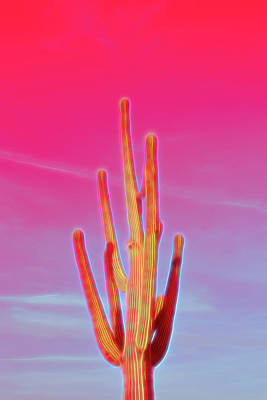 Photograph - Red Glow Saguaro Cactus by Aimee L Maher ALM GALLERY