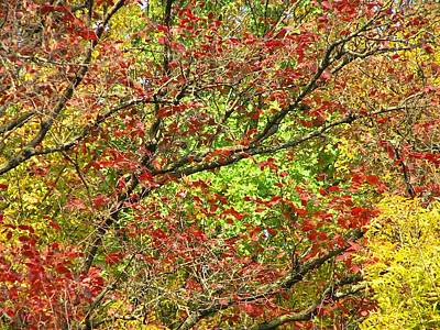 Photograph - Gold Red Green Autumn by Oleg Zavarzin