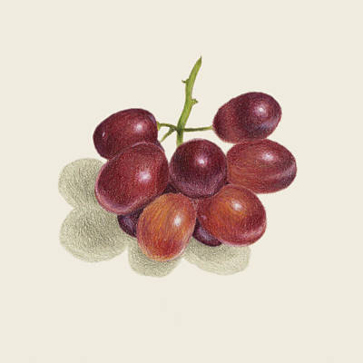 Local Food Drawing - Red Grapes by Carlee Lingerfelt