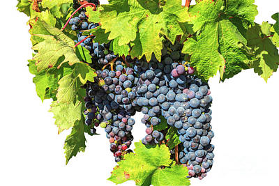 Photograph - Red Grapes Seasonal Background by Benny Marty