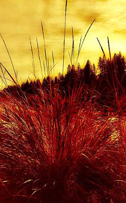 Photograph - Red Grass by Jennifer Lake