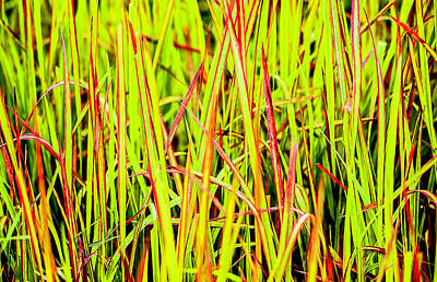 Photograph - Red Green And Yellow Grass by Reynaldo Williams