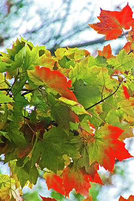Photograph - Red-green Maple Leaves On Trail To North Beach Park In Ottawa County, Michigan by Ruth Hager