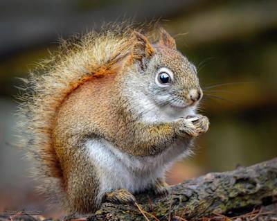Photograph - Red Ground Squirrel by LeeAnn McLaneGoetz McLaneGoetzStudioLLCcom