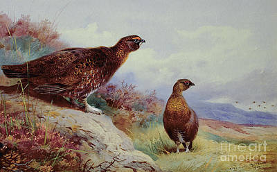 Nature Scene Painting - Red Grouse On The Moor, 1917 by Archibald Thorburn