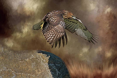 Photograph - Red Hawk Down by Donna Kennedy