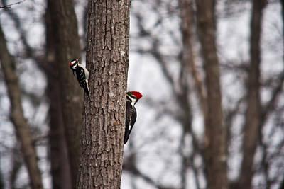 Moody Trees - Red Headed Woodpecker 2 by Douglas Barnett