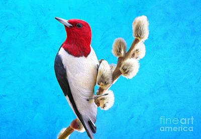 Pussy Willow Photograph - Red Headed Woodpecker by Laura D Young