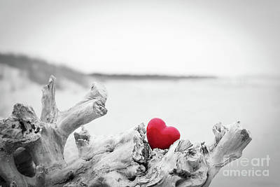 Photograph - Red Heart In A Tree Trunk On The Beach.. Love Symbol. Red Against Black And White by Michal Bednarek