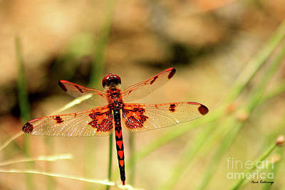 Dragonfly Art Photograph - Red Hearts Dragonfly Art by Reid Callaway