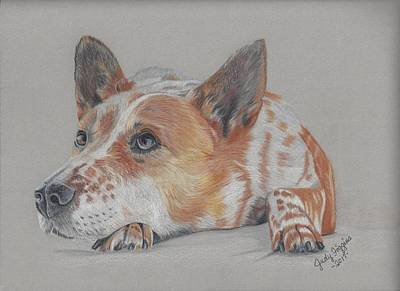 Cattle Dog Drawing - Red Heeler by Judy Figgins